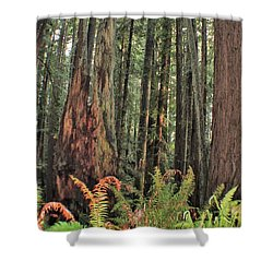 Humboldt Redwoods Shower Curtain