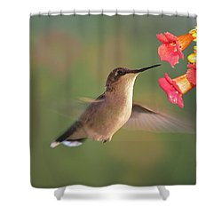 Hummer With Trumpet Vine Flowers Shower Curtain by Judy Johnson