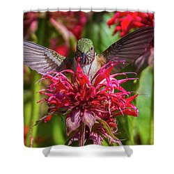 Hummingbird At Eagles Nest Shower Curtain