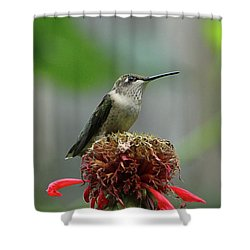 Humming Bird Atop Bee Balm Shower Curtain