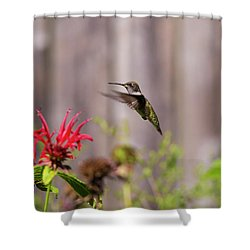 Humming Bird Hovering Shower Curtain