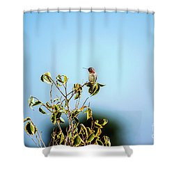 Shower Curtain featuring the photograph Humming Bird On A Branch by Micah May