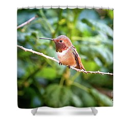 Humming Bird On Stick Shower Curtain by Stephanie Hayes