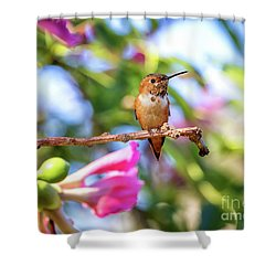 Humming Bird Pink Flowers Shower Curtain by Stephanie Hayes