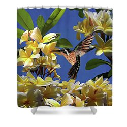 Hummingbird 01 Shower Curtain