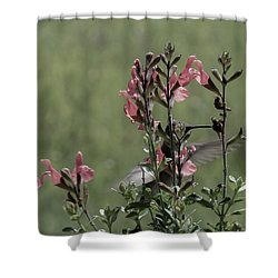 Hummingbird 1 Shower Curtain