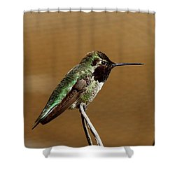 Shower Curtain featuring the photograph Hummingbird - 2 by Christy Pooschke