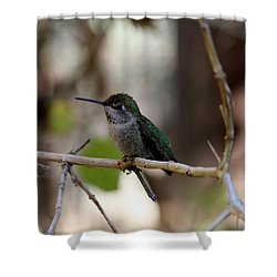 Shower Curtain featuring the photograph Hummingbird - 3 by Christy Pooschke