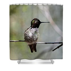 Hummingbird - 4 Shower Curtain