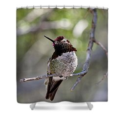 Shower Curtain featuring the photograph Hummingbird - 6 by Christy Pooschke