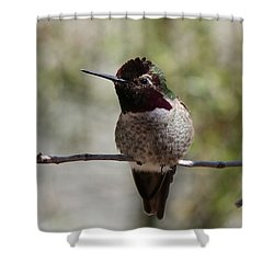 Hummingbird - 7 Shower Curtain