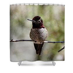 Hummingbird - 8 Shower Curtain