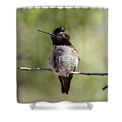Shower Curtain featuring the photograph Hummingbird - 9 by Christy Pooschke