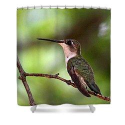 Hummingbird - Afternoon Ruby Shower Curtain by Travis Truelove