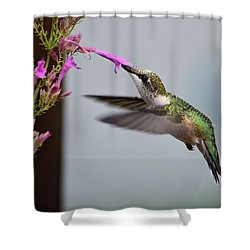 Hummingbird And Agastache Shower Curtain