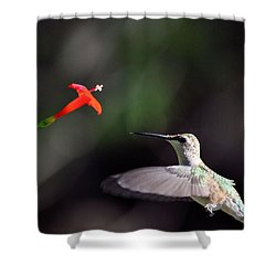 Hummingbird And Cardinal Climber Shower Curtain