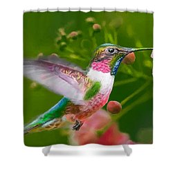 Hummingbird And Flower Painting Shower Curtain