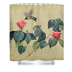Hummingbird And Japanese Camillea Shower Curtain