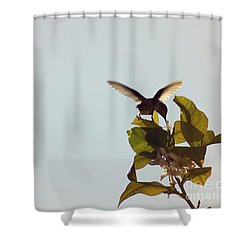 Shower Curtain featuring the photograph Hummingbird And Lemon Blossoms by Cindy Garber Iverson