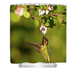 Hummingbird And Manzanita Blossom Shower Curtain