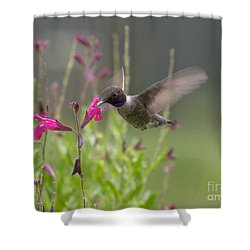 Hummingbird And Sage Shower Curtain
