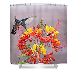 Shower Curtain featuring the photograph Hummingbird At Work by Dan McManus