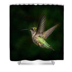 Hummingbird B Shower Curtain