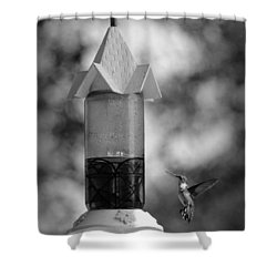 Hummingbird - Bw Shower Curtain