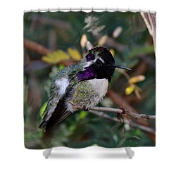 Shower Curtain featuring the photograph Hummingbird  by Christy Pooschke