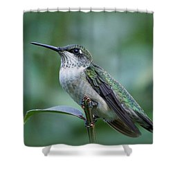 Hummingbird Close-up Shower Curtain by Sandy Keeton