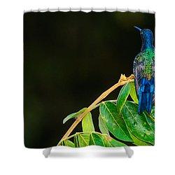 Hummingbird Shower Curtain by Daniel Precht