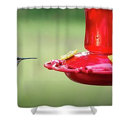 Hummingbird Shower Curtain by Denis Lemay