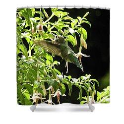 Hummingbird Feeding Shower Curtain by Brian Chase