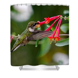 Hummingbird Feeding Shower Curtain by Gary Wightman
