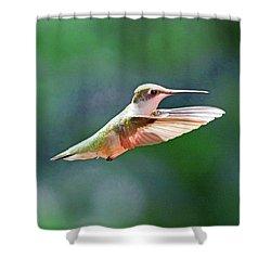Shower Curtain featuring the photograph Hummingbird Flying by Meta Gatschenberger