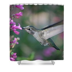 Shower Curtain featuring the photograph Hummingbird by Frank Stallone
