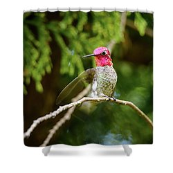 Hummingbird Gorget Shower Curtain by Kathy King