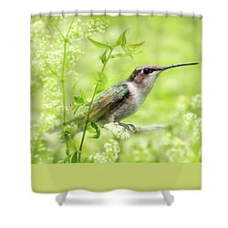Hummingbird Hiding In Flowers Shower Curtain by Christina Rollo