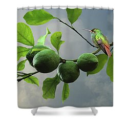 Hummingbird In Lime Tree Shower Curtain