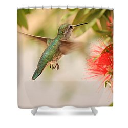 Hummingbird In Paradise Shower Curtain