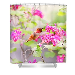 Hummingbird In Spring Shower Curtain by Peggy Collins