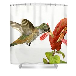Hummingbird In The Flower Shower Curtain by Phil Stone