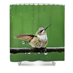 Hummingbird In The Rain Shower Curtain by Christina Rollo