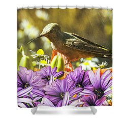 Hummingbird In The Spring Rain Shower Curtain by Diane Schuster