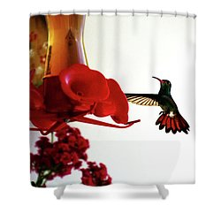 Hummingbird In Tulua, Colombia Shower Curtain