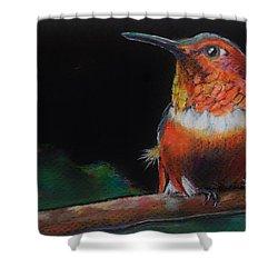 Hummingbird Shower Curtain by Jean Cormier