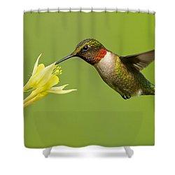 Hummingbird Shower Curtain by Mircea Costina Photography