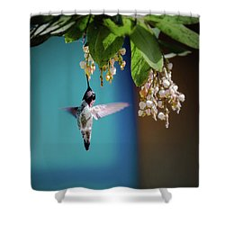 Hummingbird Moment Shower Curtain by Mark Dunton
