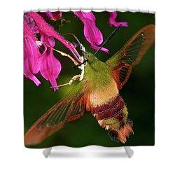 Hummingbird Moth Shower Curtain