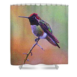 Hummingbird On A Stick Shower Curtain by Tom Janca